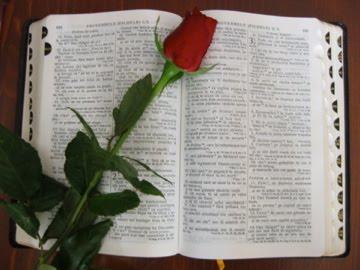 ccs Bible with rose
