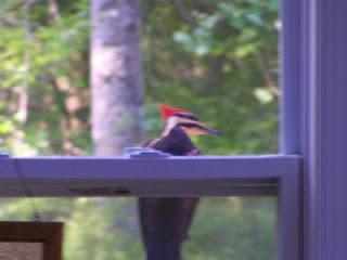 April birding in Georgia