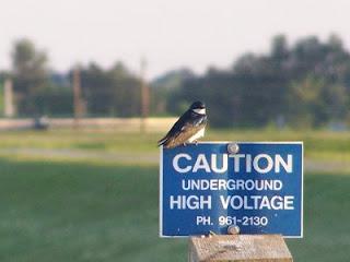 Youth Birding